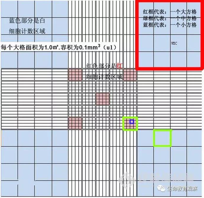 """一图看懂""""血细胞计数板""""的用法和计数原理"""